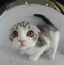 fraidy_cat.jpg
